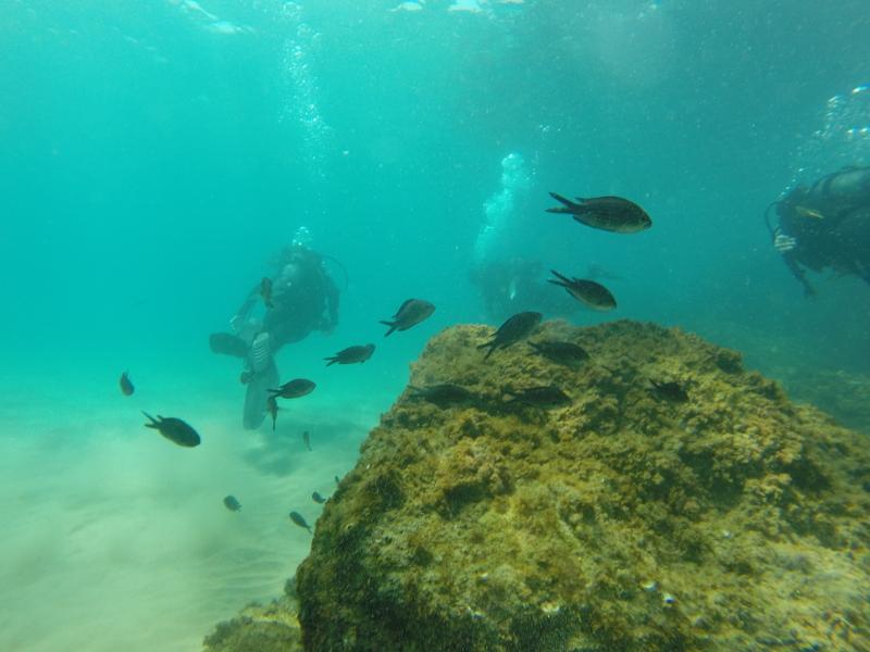 En esta foto podemos ver como disfrutan de un bautizo de mar. Se ven muchos peces.