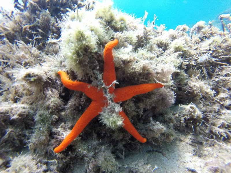 En este bautizo de buceo pudimos ver una estrella de mar. Es preciosa.